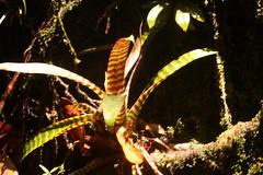 Guyana-0966