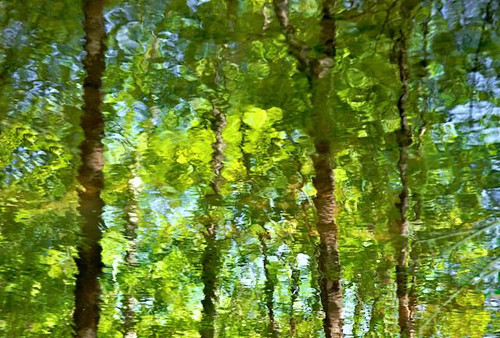 TreesInWater