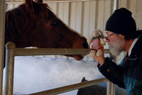 2011-11-27LucyHorsesGuy07-1