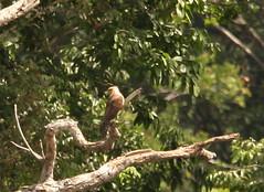Guyana-0183