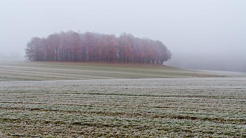 winter tree nature field fog landscape nikon frost nebel natur feld tamron landschaft baum d90 nikond90