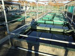 水元公園20111205-013