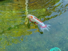 水元公園20111205-046