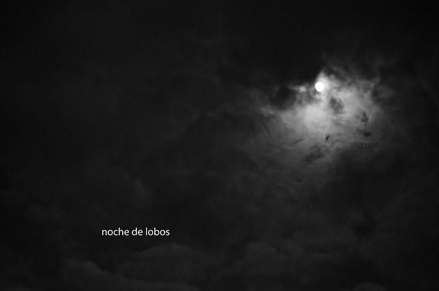 66/366: noche de lobos