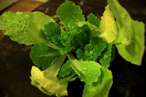 My weird napa cabbage