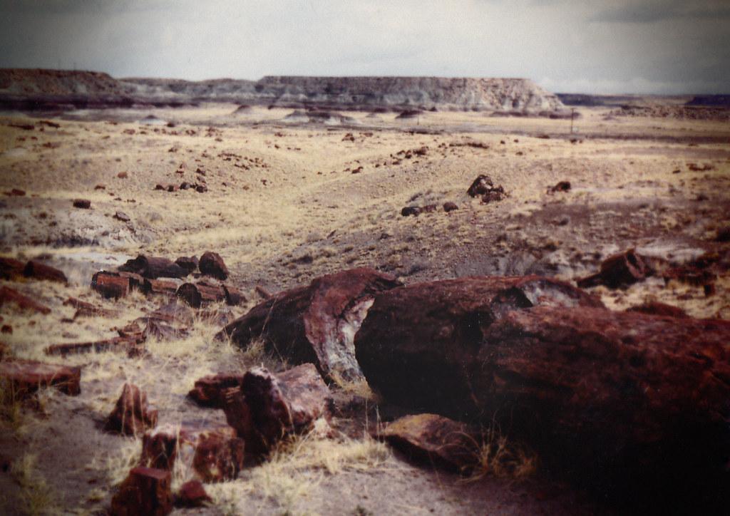 1990, Petrified Forest, Arizona