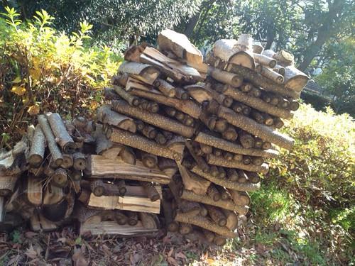 おじさんたちが剪定した木をつかって薪をつくったようです。@散歩道