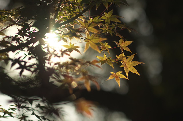 陰と陽と ~ 日照