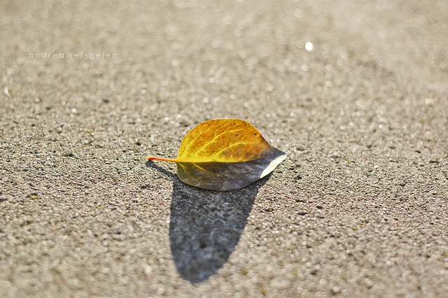 lonely leaf.
