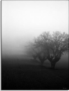 Fog and trees - (on Explore Dic.-15/2011)
