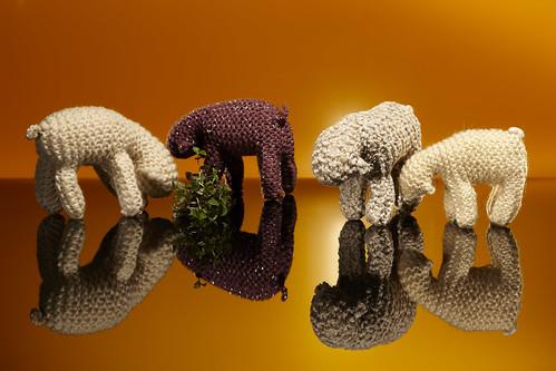 Sheep2011 0484