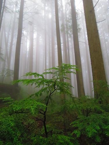 lush mist
