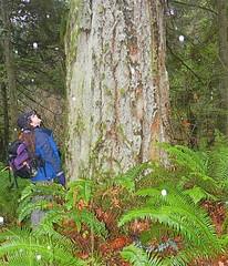 Joan and a big tree