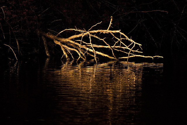 lakeside sunlit roots