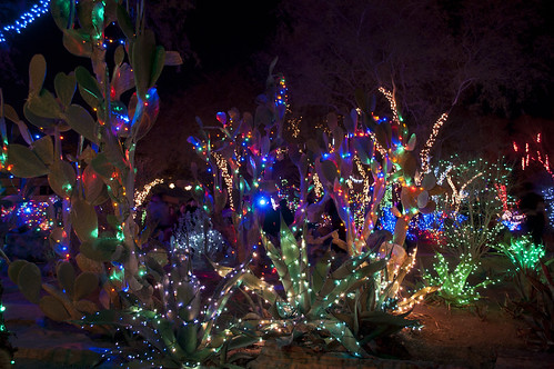 This is Ethel M Chocolates Cactus garden, in Las Vegas, during the  holidays