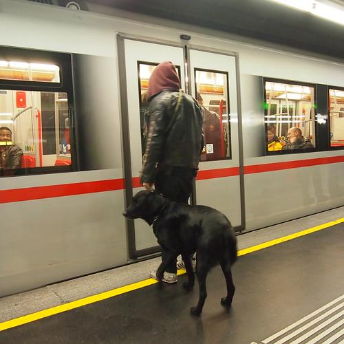 ウィーンはイヌ天国!そのまま電車に乗れます。しかも、けっこうイヌ連れがいる!@ウィーン