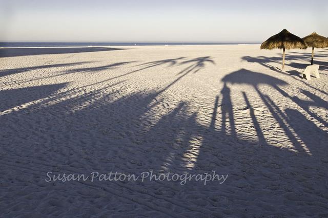 wShadow_palms