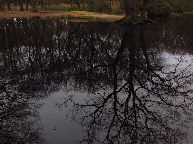 Iron Pan Pond on Sandy Heath