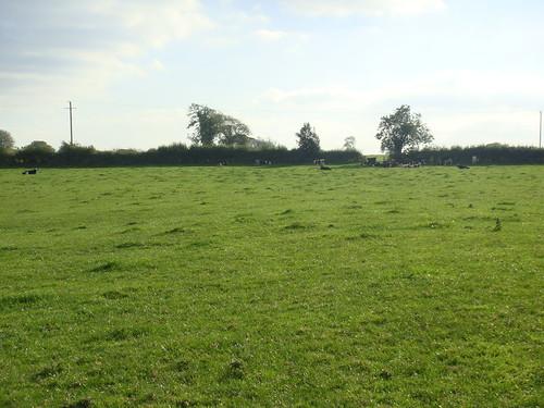 Prado con vacas pastando