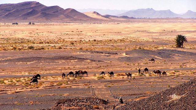 """ Desert Caravan """