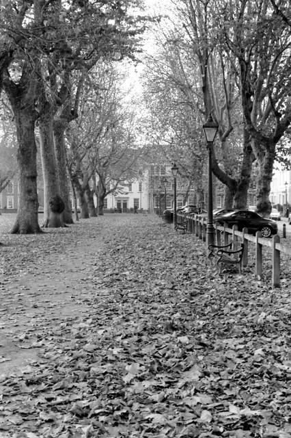 Queen Square, Leafy