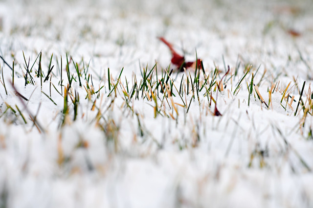 snowy ground