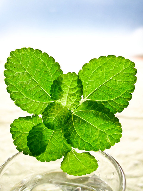 IMG_1183 Green leaves