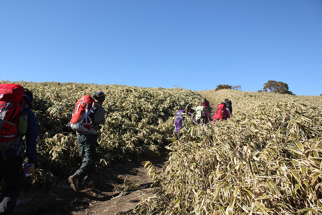 竜ヶ岳登山