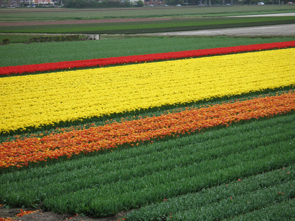 photo essay keukenhof the world s largest flower garden here s