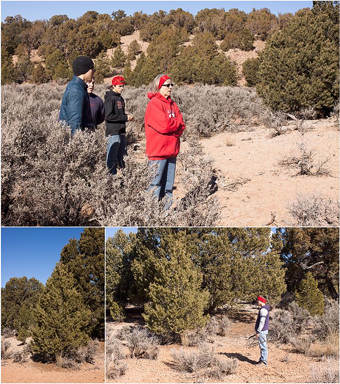 Tree Hunt3