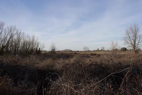 Wasteland View
