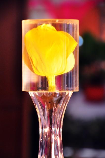 King Bhumibol Tulip, Royal Floral, Chiang Mai