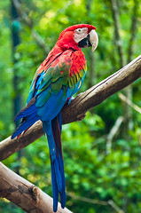 animal, macaw, parrot, branch, pet, fauna, parakeet, lorikeet, beak, bird, wildlife,
