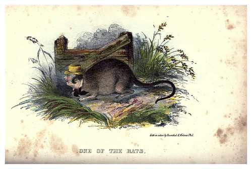 007-Una de las ratas-The comic natural history of the human race (1851)- Henry Louis Stephens