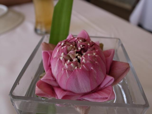 <p>c)大きな花弁はきれいにたたまれて、かわいい大きさに整えられてます</p>