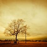 Seaside Park - Bridgeport, CT