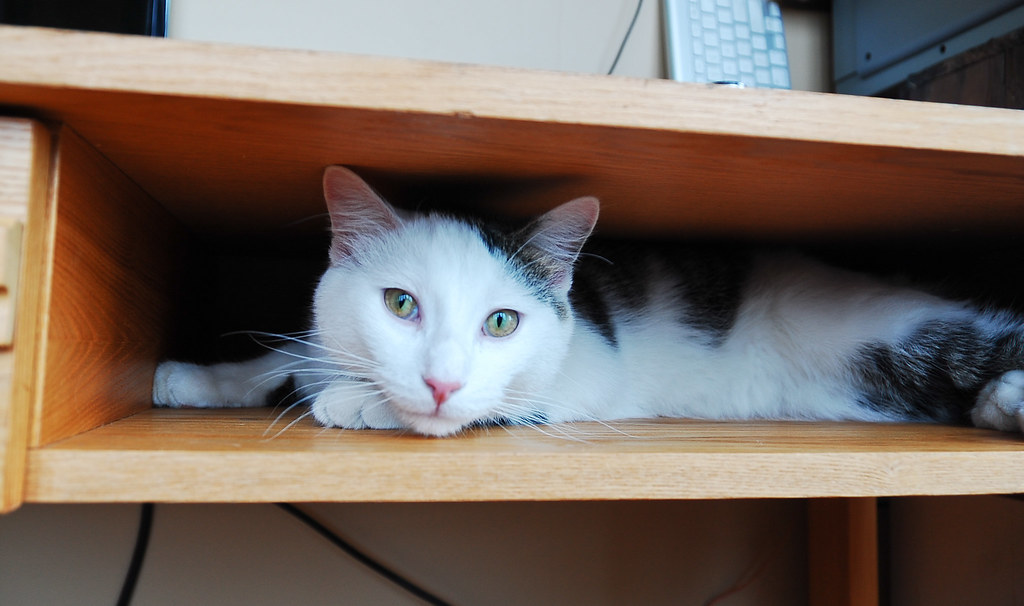 kitty in the desk