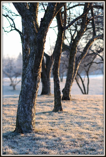frosty sunrise 4