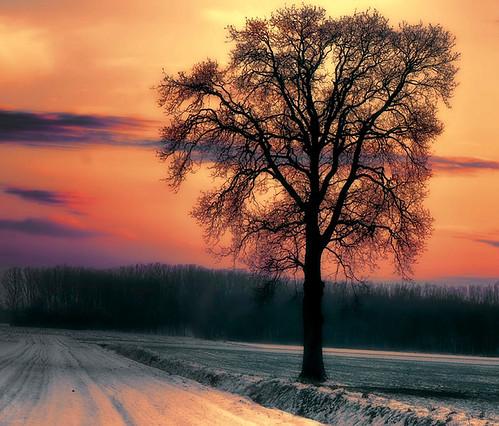 winter sunset snow netherlands landscape nikon frost ngc nederland npc mygearandme mygearandmepremium mygearandmebronze mygearandmesilver mygearandmegold mygearandmeplatinum mygearandmediamond flickrawardgallery
