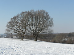 Winter  Jan  2012