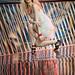 Myzeil Fashion by Vicco Gallo