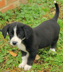 AddisonJan_2012_puppies_068