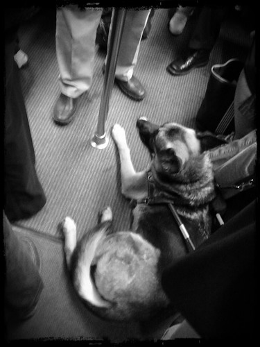 Seeing eye dog on metro