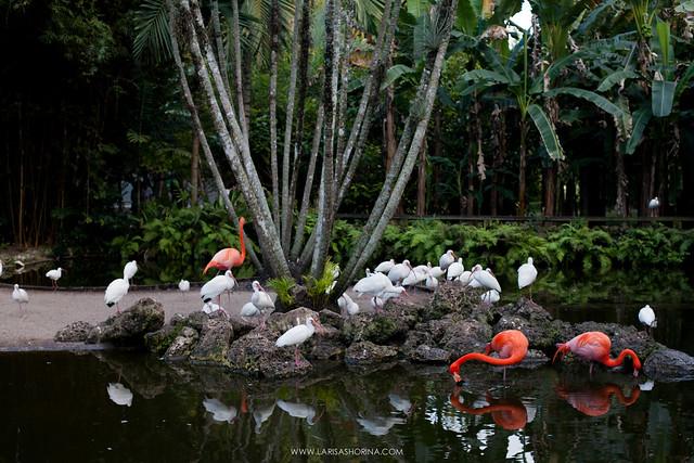 Flamingo Gardens // Miami