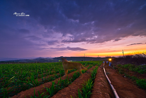 longexposure sunset summer field landscape spring interesting nikon scenery glow farm taiwan explore 南投 crop 夕陽 agriculture 台灣 自然 ultrawide 日落 風景 puli 埔里 2014 nantou 景色 晚霞 nightimage 黑卡 農田 秘境 星芒 大坪頂 農作物 天光 長曝 薑 夕彩 1424mm d800e