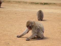 Monkey park in Arashiyama - top of a hill
