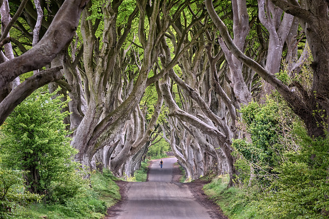The Dark Hedges - County Antrim - Northern Ireland