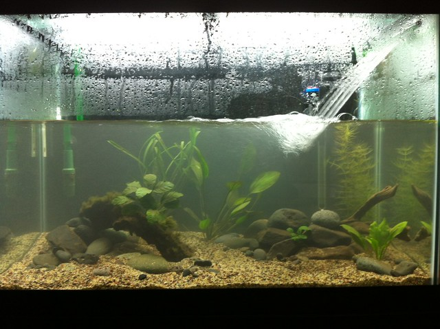 65 gallon planted tank setup journal tropical fish for 65 gallon fish tank