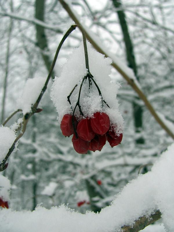 Winter jewel :: Bijou d'hiver