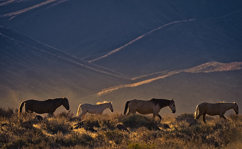 "Mustangs' ""Waterhole Walk"" by Jeffrey K. Edwards"